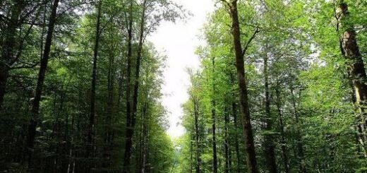 سفر به جنگل های هیرکانی